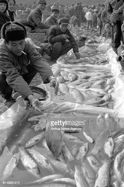 BEIJING Feb 6 2018 File photo taken in February 1985 shows Villager Xu Zhili from Guanzhuang Village selling fishes in a market in Jinan City east...