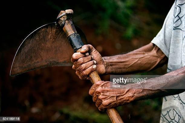 February 2013 Guaxupe region of Sao Sebastiao do Paraiso Minas Gerais State Brazil Jorge Consultorio Da Silva a farm worker of the Piedade fazenda or...
