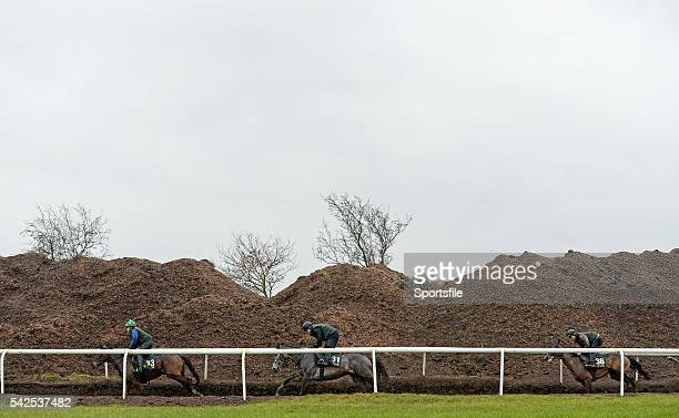 29 February 2016 Horses Augusta Kate left Petit Mouchoir centre and Very Much So right out on the gallops Willie Mullins Stable Visit ahead of...