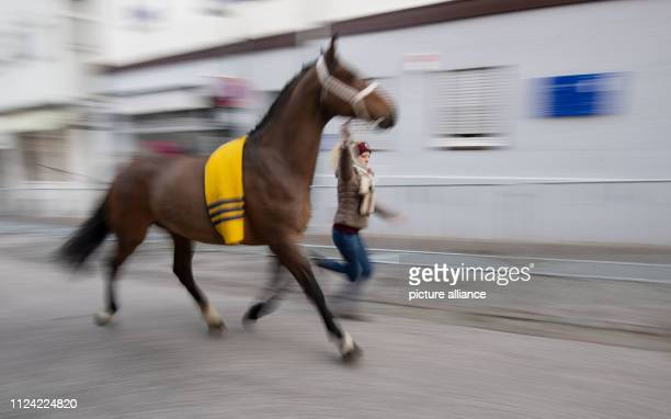 12 February 2019 BadenWuerttemberg Leonberg An employee of a horse dealer leads a horse through an alley at the Leonberger Pferdemarkt Photo Marijan...