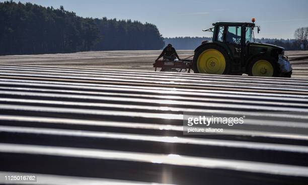 Employees of Spargelhof Josef Jakobs GbR lay foil on rows of asparagus The official opening of the Beelitz asparagus season is scheduled for 11 April...
