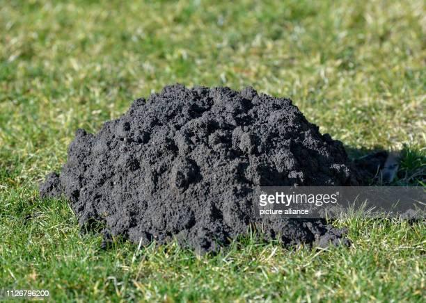 A molehill is in a green meadow Photo Patrick Pleul/dpaZentralbild/ZB