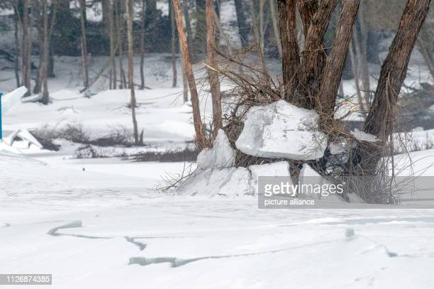 07 February 2019 SaxonyAnhalt Mandelholz Ice floes hang from the Mandelholz dam in the flotsam that has collected on a tree The artificial water body...
