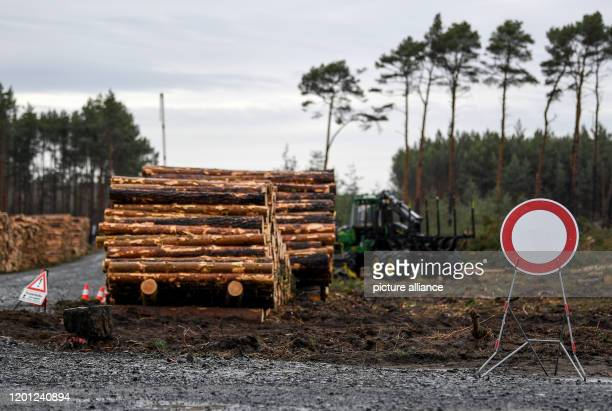 February 2020, Brandenburg, Grünheide: Clearing machines are on the site for the planned Tesla factory. The Higher Administrative Court of...