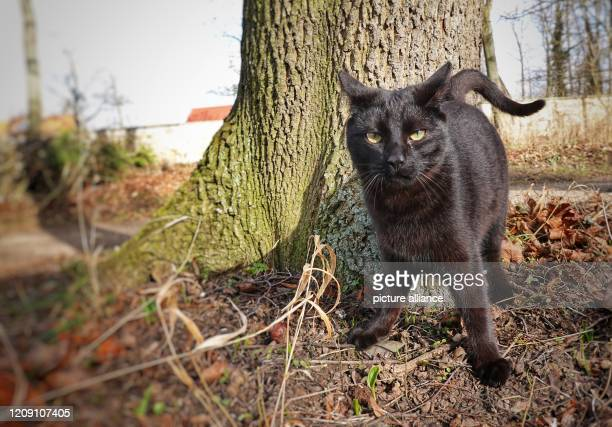 A black cat stands in a park next to a tree in the sun Photo Soeren Stache/dpaZentralbild/ZB