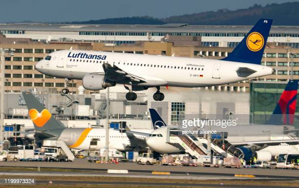 February 2020, Hessen, Frankfurt/Main: A Lufthansa jet lands on schedule at Frankfurt Airport in the morning. Flight operations at Germany's largest...
