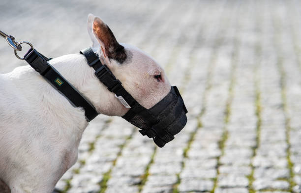 DEU: Controversy About Miniature Bull Terriers