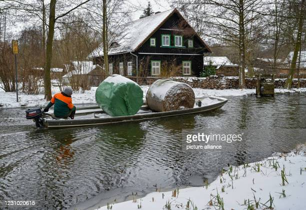 February 2021, Brandenburg, Lehde: A man transports rolls of hay in a barge on a river in the snowy Spreewald village of Lehde. Photo: Patrick...