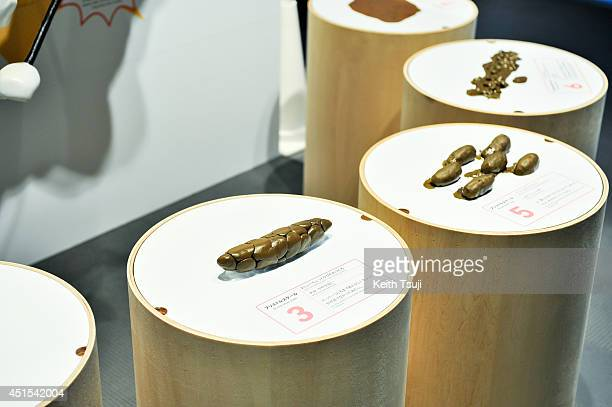 Feces models are displayed during the 'Toilet Human Waste and Earth's Future' exhibition at The National Museum of Emerging Science and Innovation...