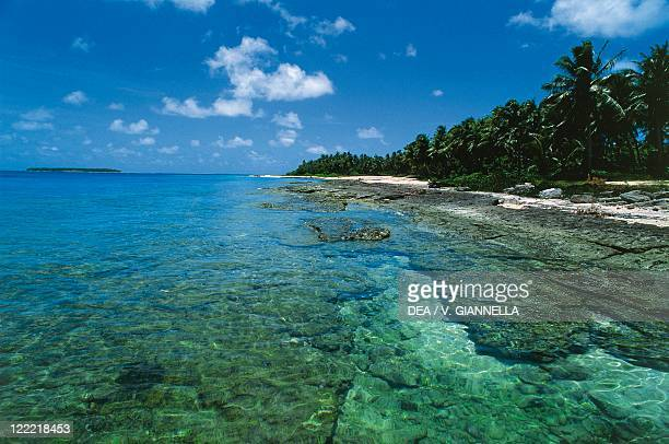 Federated States of Micronesia Yap Islands Ulithi Atoll Falalop islet Coral reef and palm trees on the beach