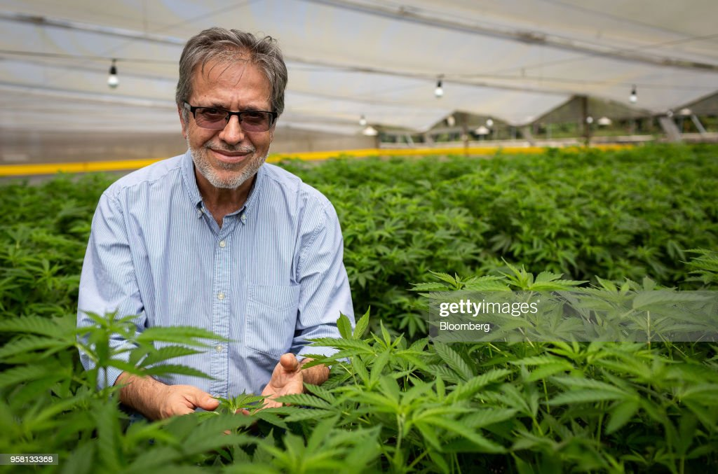 Federico Cock-Correa, director and chief executive officer of PharmaCielo Colombia Holdings SAS, stands for a photograph at the PharmaCielo facility in Rionegro, Colombia, on Thursday, April 26, 2018. Following the 2015 legalization of medical marijuana by Colombian President Juan Manuel Santos, the Canadian company PharmaCielo opened an operational base in the South American country, becoming the first company to apply for and receive the Colombian licences for cannabis cultivation. Photographer: Eduardo Leal/Bloomberg via Getty Images