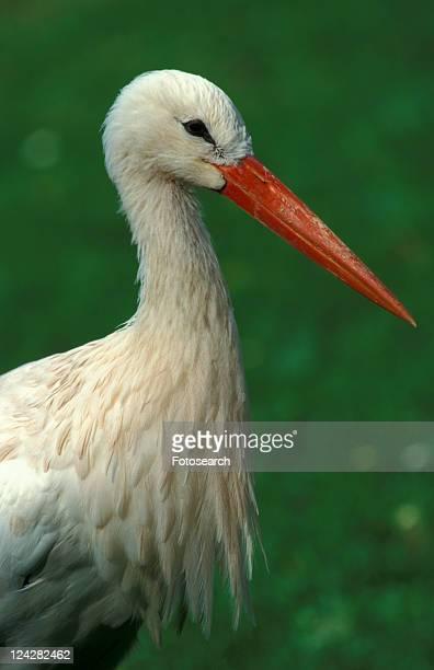federn, animals, aves, beak