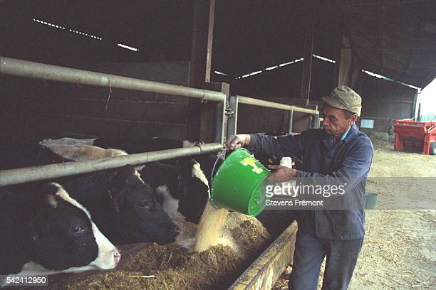 Feed mainly consists of maize to which Sanders meal is added