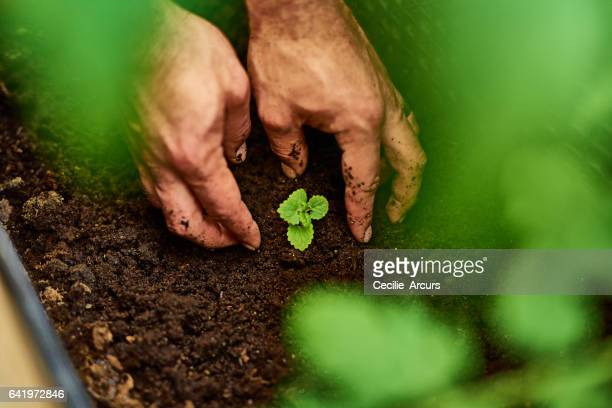 Feed the soil, feed your soul