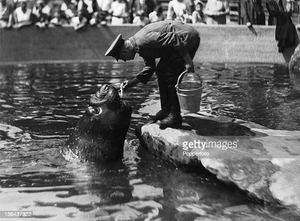Feeding a sea lion at a water park circa 1950