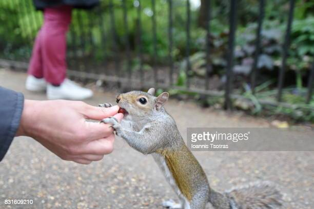 Feeding a squirrel from hand
