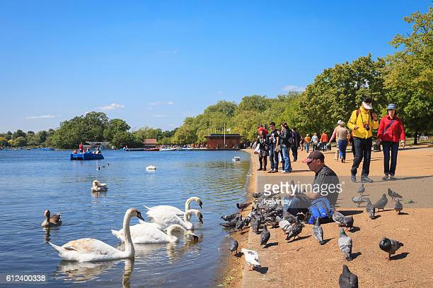 feeding birds at the serpentine in hyde park, london - hyde park london stock photos and pictures