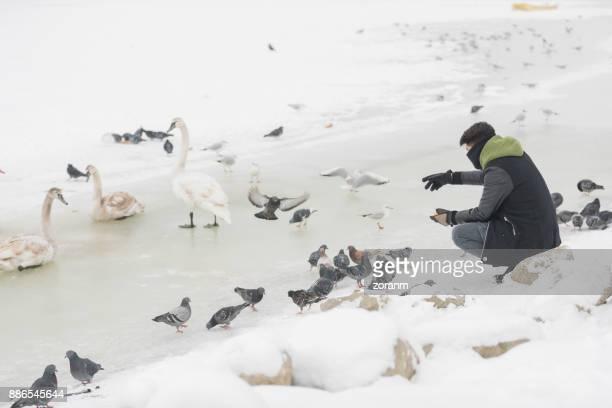 Feeding birds at winter