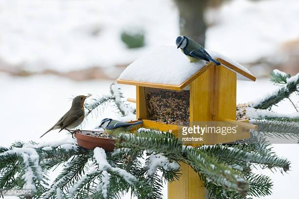 feeding birds in wintertime - birdhouse stock pictures, royalty-free photos & images