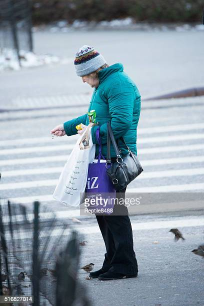 feeding birds - animal welfare stock photos and pictures