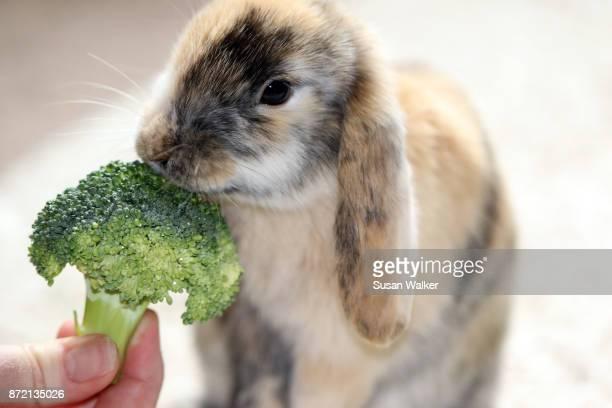Feeding bunny