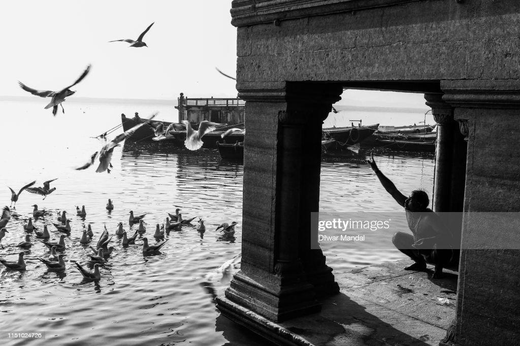 Feeding Gulls At Early Morning In Varanasi : Stock Photo
