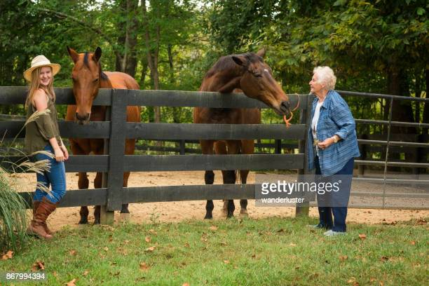 feeding horses on a farm - kentucky stock pictures, royalty-free photos & images