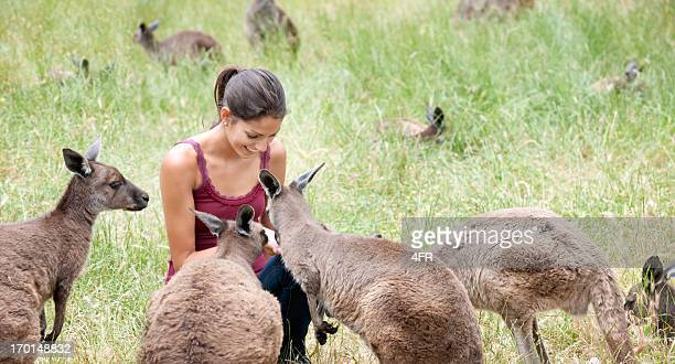 Feeding Kangaroos in the Wild