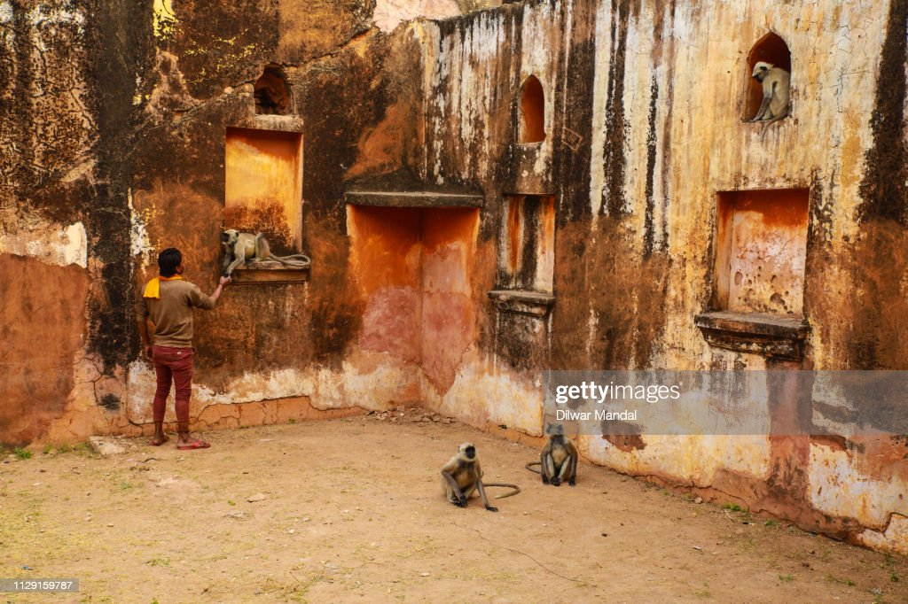 Feeding monkey at Jaigarh Fort : Stock Photo