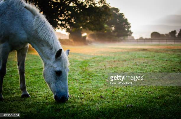 feeding - grazing stock pictures, royalty-free photos & images