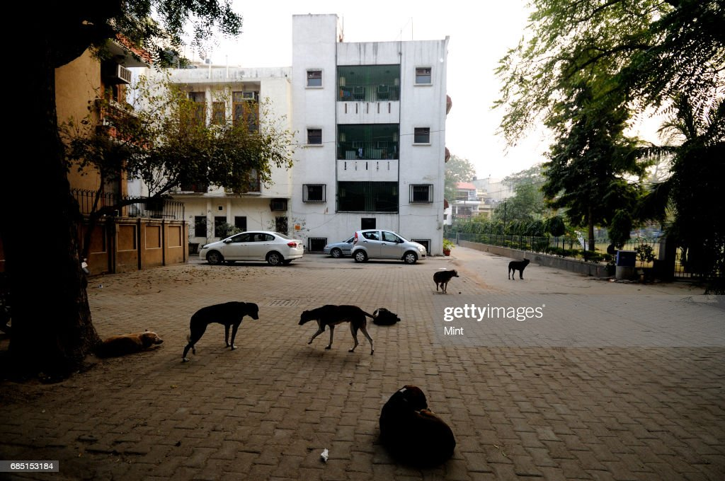 Feeding place for street dogs in different parts of Delhi.