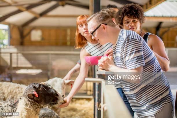 Füttern Schaf
