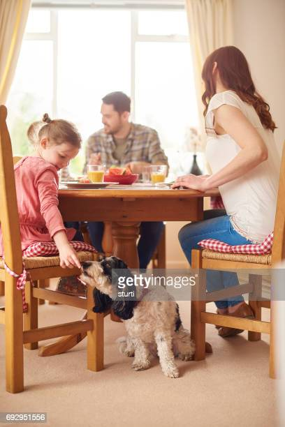 feeding the dog at the table - dog eats out girl stock photos and pictures
