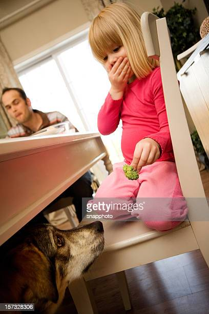feeding the dog - dog eats out girl stock pictures, royalty-free photos & images