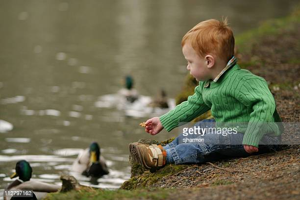 Feeding the ducks - 1