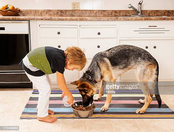 feeding the family dog - feeding stock pictures, royalty-free photos & images