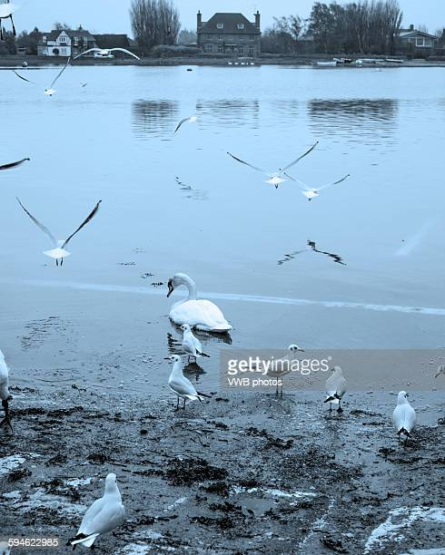 Feeding the gulls, Bosham, East Sussex, England