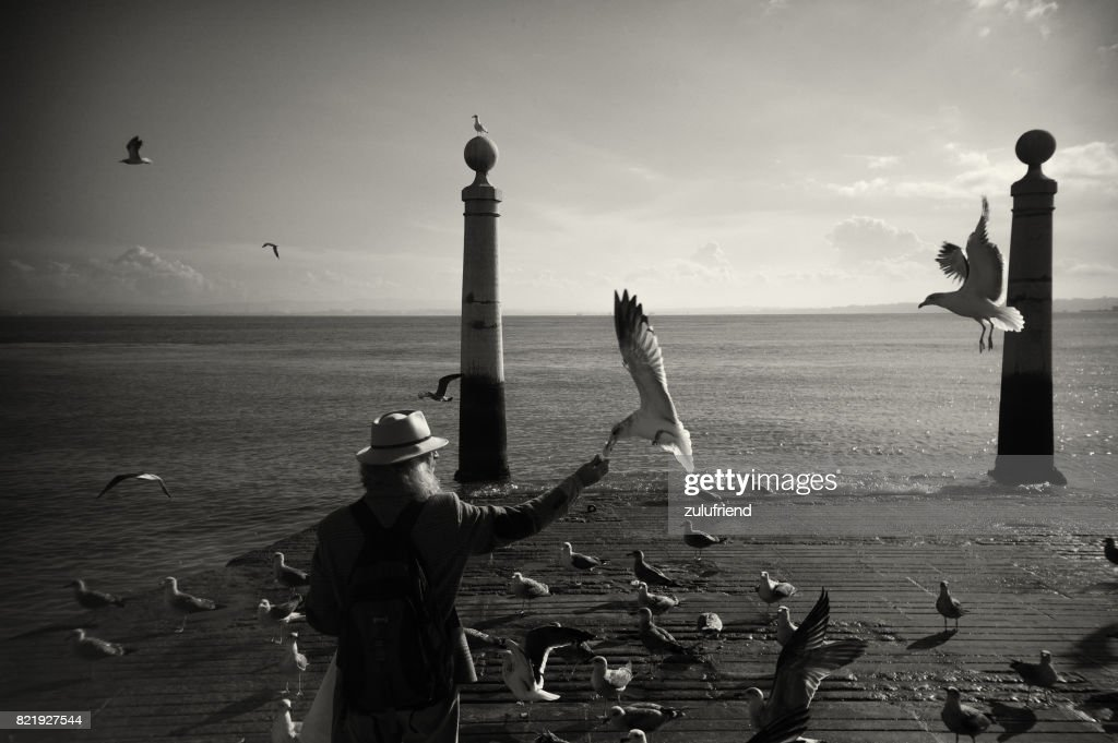 Feeding the Seagulls : Stock Photo