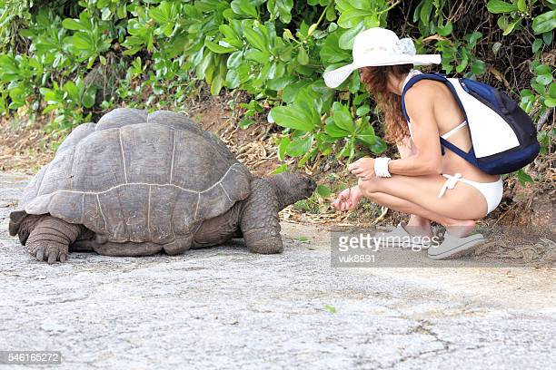 feeding the turtles - la digue island stock pictures, royalty-free photos & images