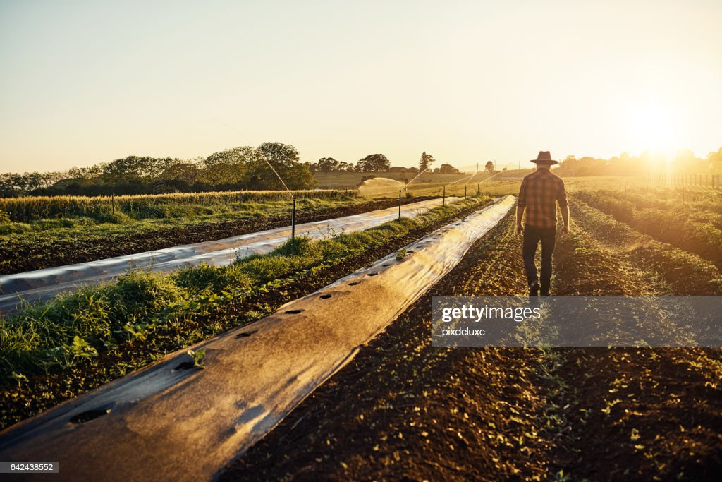 Feeding the world one seedling at a time : Stock Photo
