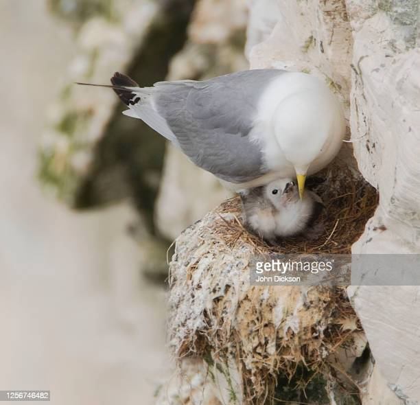 feeding time - young bird stock pictures, royalty-free photos & images