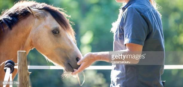 Utfodring unghäst