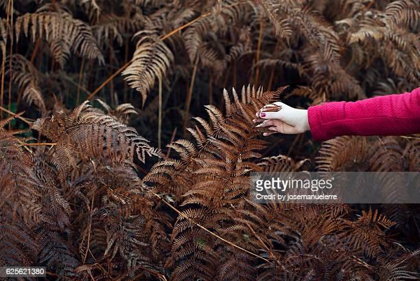 feel the autumn - josemanuelerre fotografías e imágenes de stock