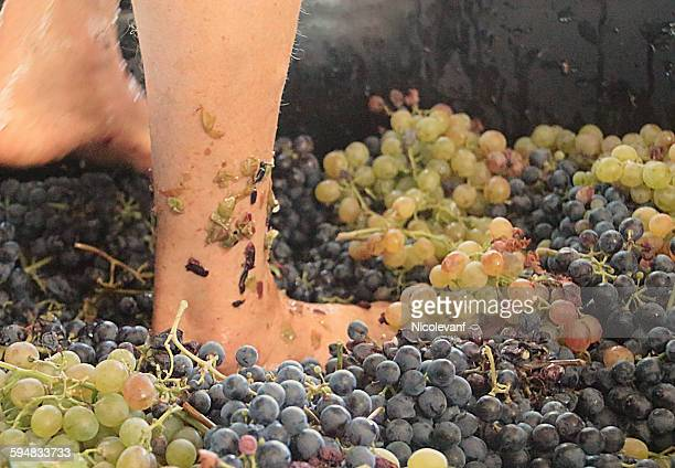 Feet crushing grapes in vineyard
