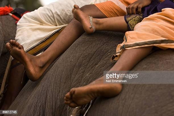 feet on an elephant, kerala, india - kerala elephants stock pictures, royalty-free photos & images