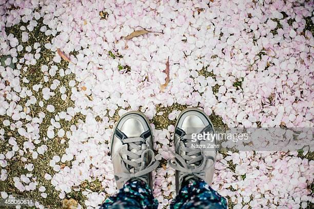 Feet on sakura petals