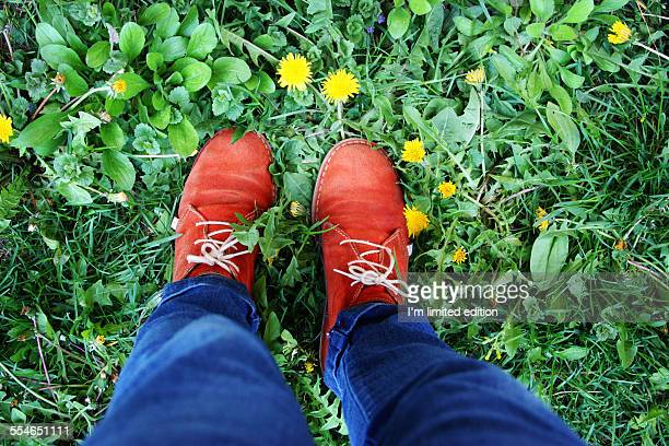 Feet on the grass and dandelions