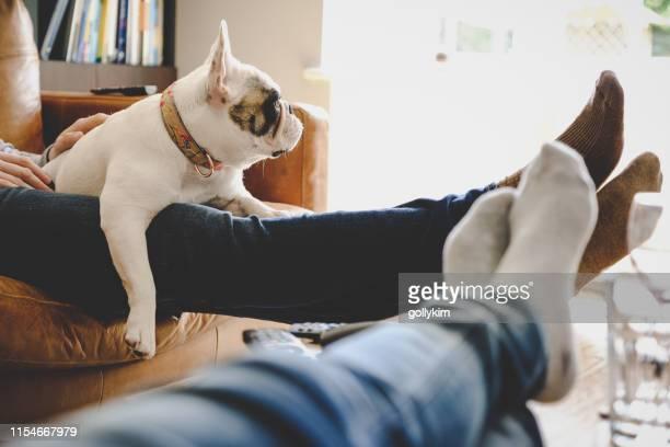 voeten omhoog op een luie middag met hond, franse bulldog - weekend activiteiten stockfoto's en -beelden