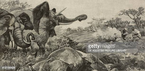 Felice Scheibler in Africa elephant hunting engraving after a drawing by Gennaro Amato from L'Illustrazione Italiana Year XX No 29 July 16 1893