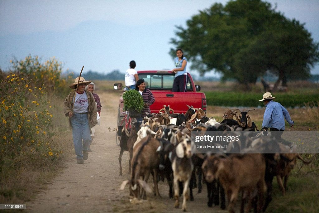 Felicitas 'Gabi' Contreras Santiago (far left) chases after her goats on November 15, 2009 in the fields surrounding the town of San Pablo Huixtepec. Gabi immigrated to the U.S. three times. Gabi is separated from her husband who also worked in the U.S. but did not send money home forcing her to be the sole breadwinner. Gabi is the leader of a group of over 200 women, sells lumber, raises goats and cares for her grandson (right) whose parents are also in the US.